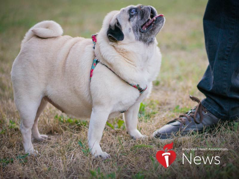 AHA News: Too Many Pets Are Packing on Too Many Pounds