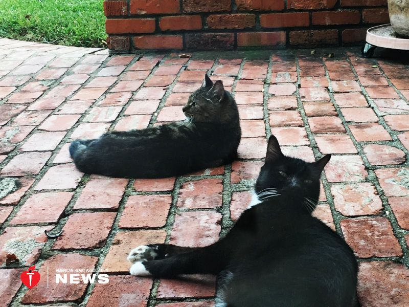 AHA: Four-Legged Friends Can Have Heart Issues, Too