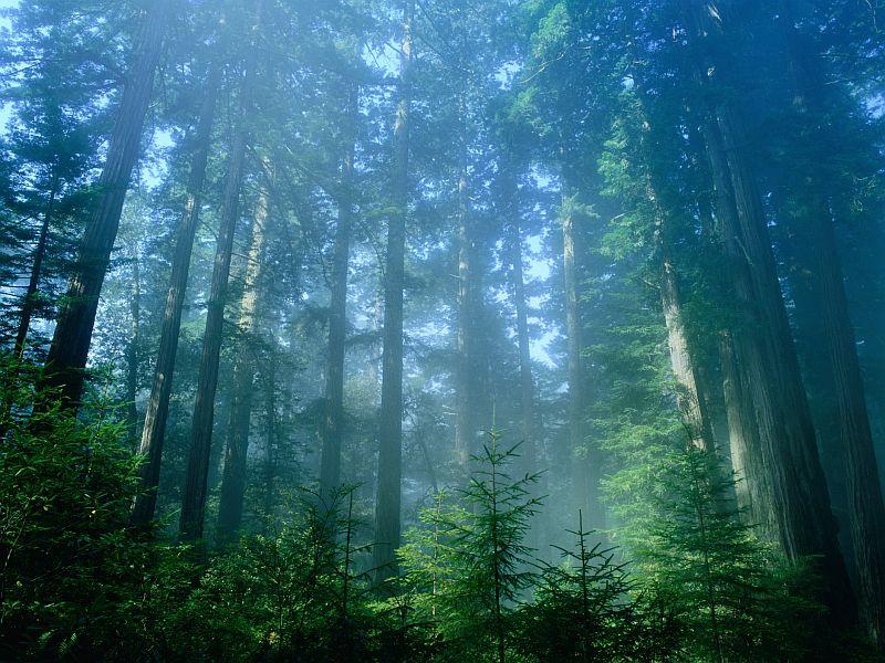 Air Pollution at National Parks Keeps Visitors Away