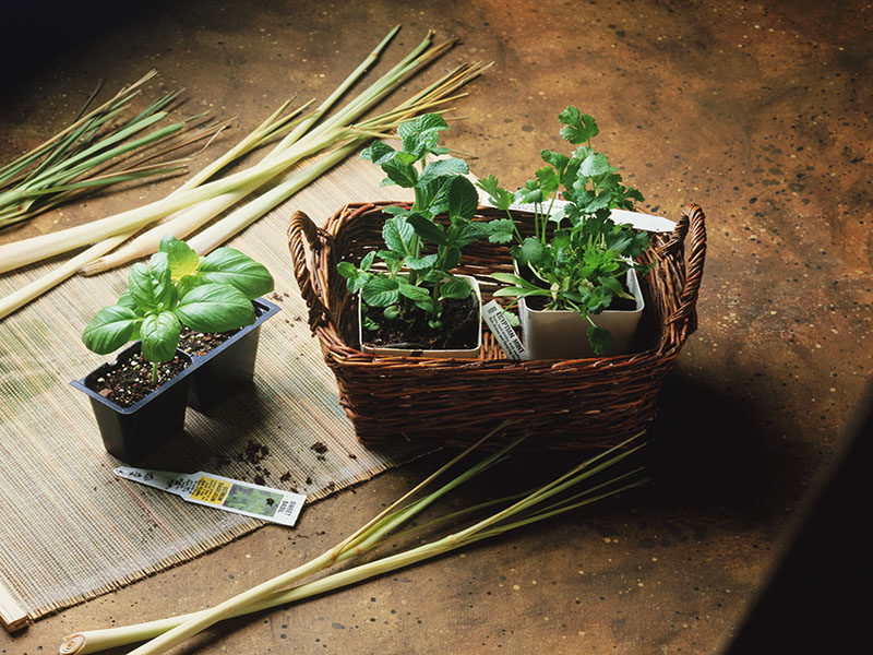 Essentials for Growing Tasty Herbs on Your Windowsill