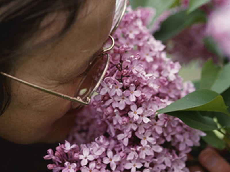 News Picture: Could Fading Sense of Smell Mean Death Is Closer?