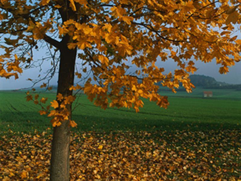 ヒトの体には2つの「季節」が存在する