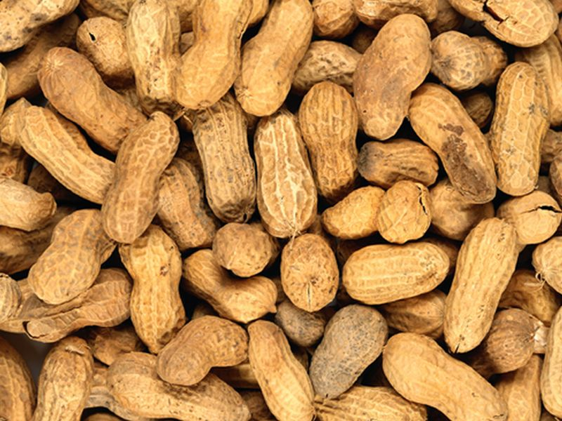 Peanut Allergy Vaccine Works -- in Mice