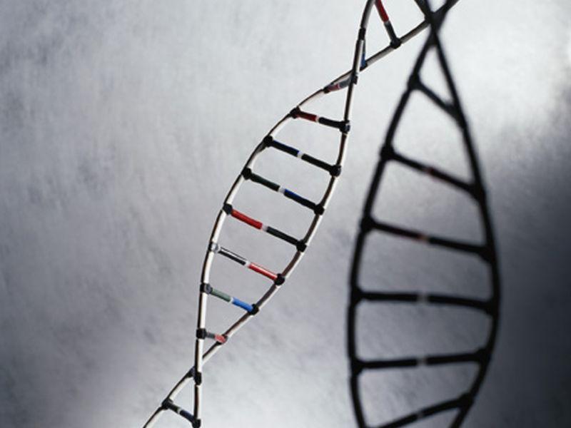 Homing in on the genetics of migraine