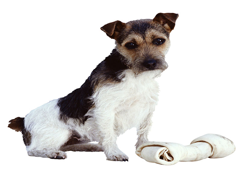 News Picture: Skin Cancer Cream Linked to 5 Dog Deaths: FDA