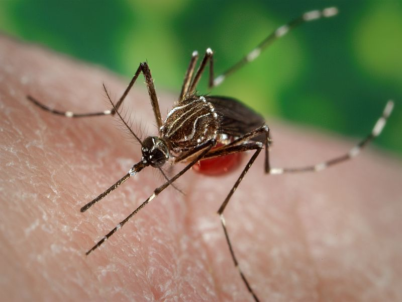 U.S. health officials: Zika poses serious threat to Puerto Rico