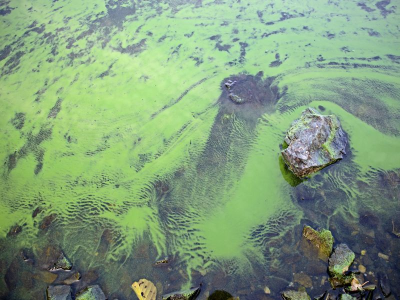 News Picture: Summer's Toxic Algae Blooms: A Growing Threat to Health?