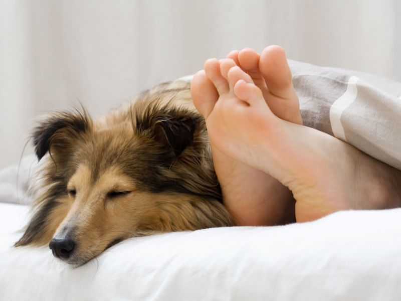 Can Man's Best Friend Chase Away Eczema, Asthma?