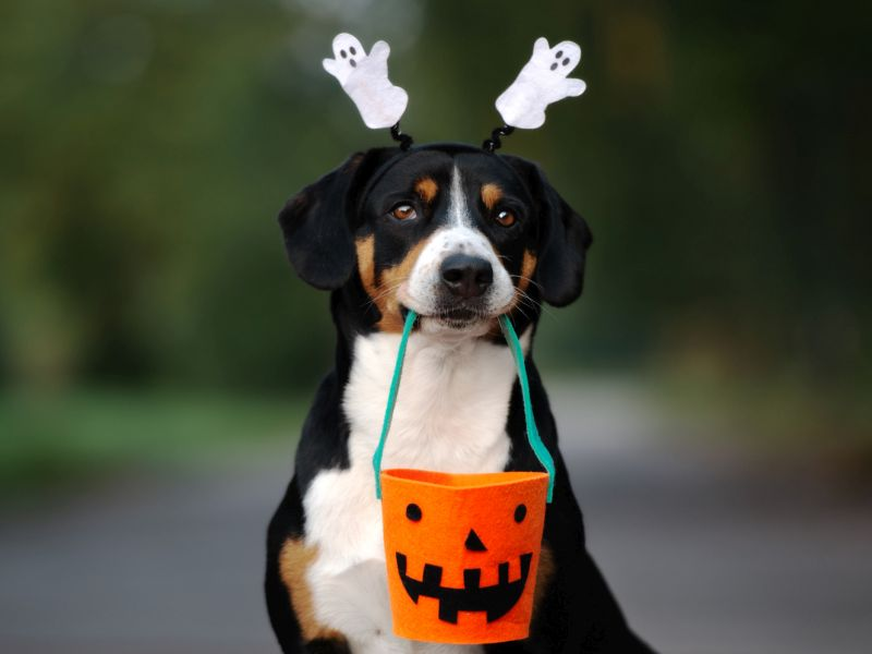 Halloween Can Be a Tricky Time for Your Pet