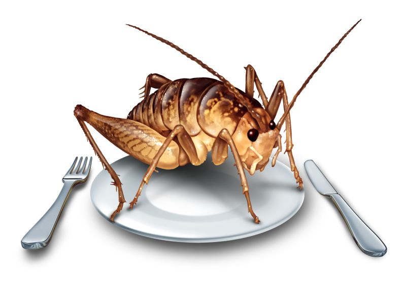 News Picture: Can Eating Crickets Boost Your Health?