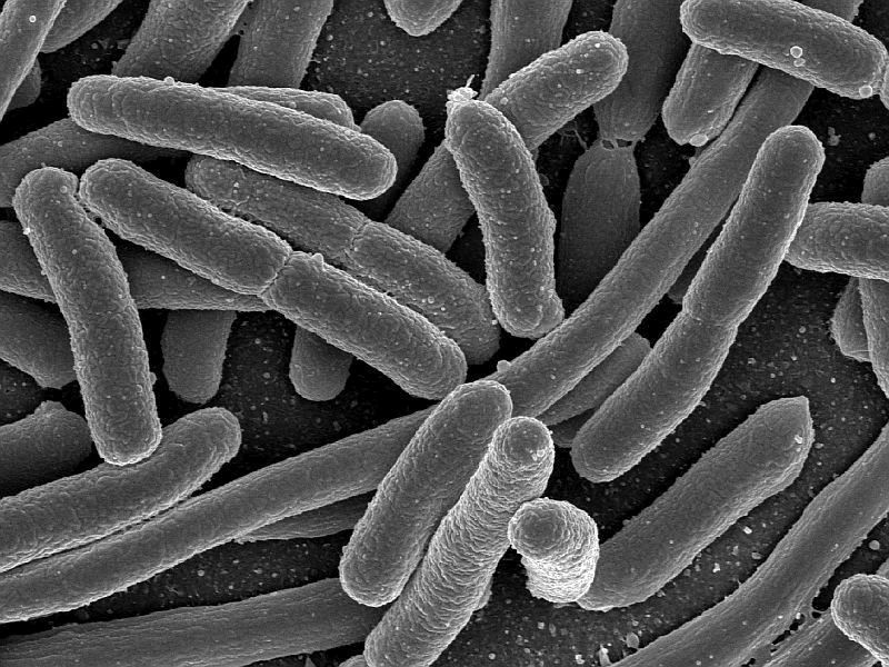 Immunity Genes for E.Coli Found