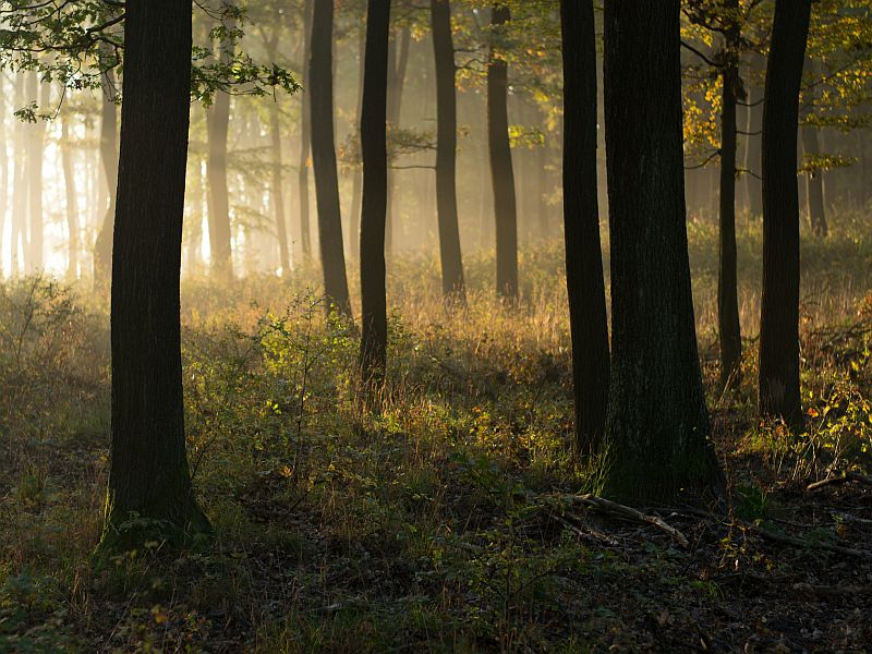 Are Forests Now Playing a Role in Pollution?