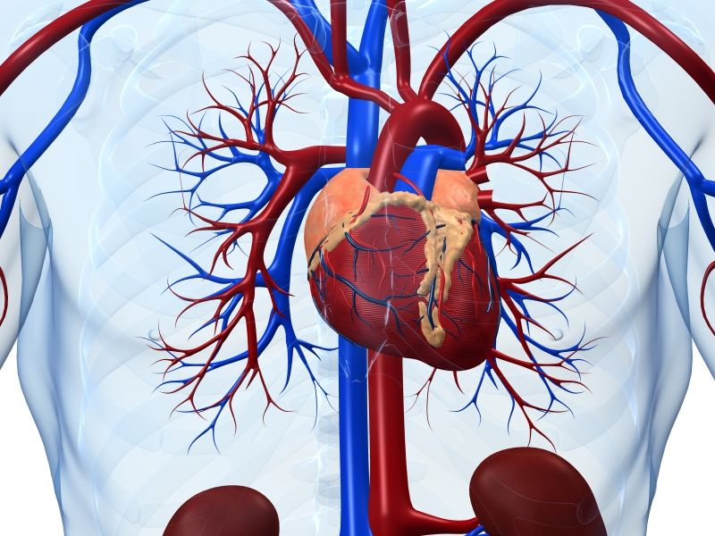 Stem cell therapy shows promise against heart failure