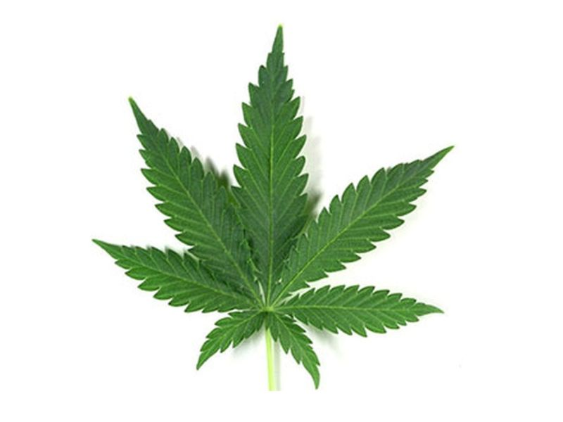 News Picture: Marijuana May Help Ease Nerve Pain, Review Finds