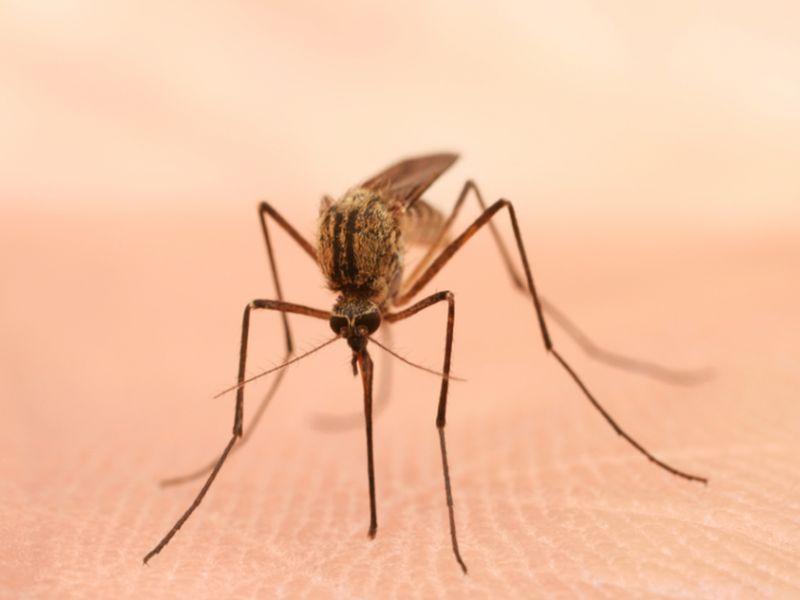 new mosquito borne virus