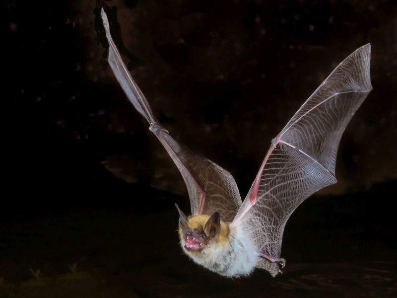 Coronavirus May Have Come From Bats; Could They Also Hold Clues to Treatments?