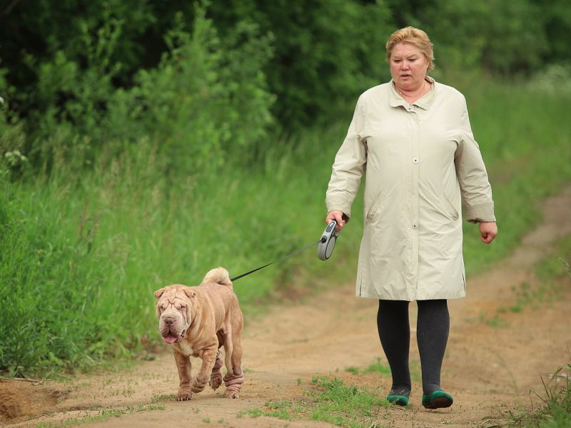 News Picture: Overweight Dog, Overweight Owner?