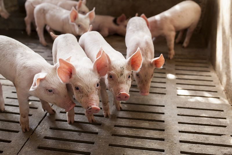 Decline in Antibiotic Use in Livestock Isn't Enough, Critics Say
