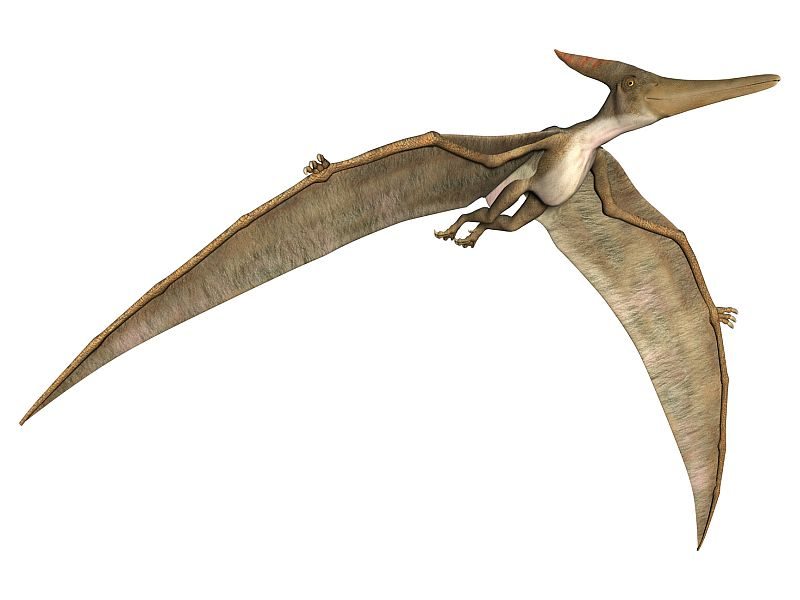 News Picture: Fossil Find Unearths New Pterosaur Species in Argentina