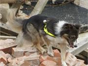 A los perros de búsqueda y rescate les fue bien tras trabajar en las áreas del 11/9
