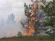 La contaminación por los incendios forestales pone en riesgo a los pacientes renales