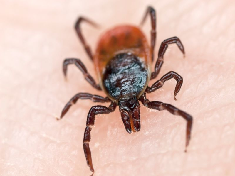To Repel Ticks This Summer, Try Insecticide-Treated Clothes