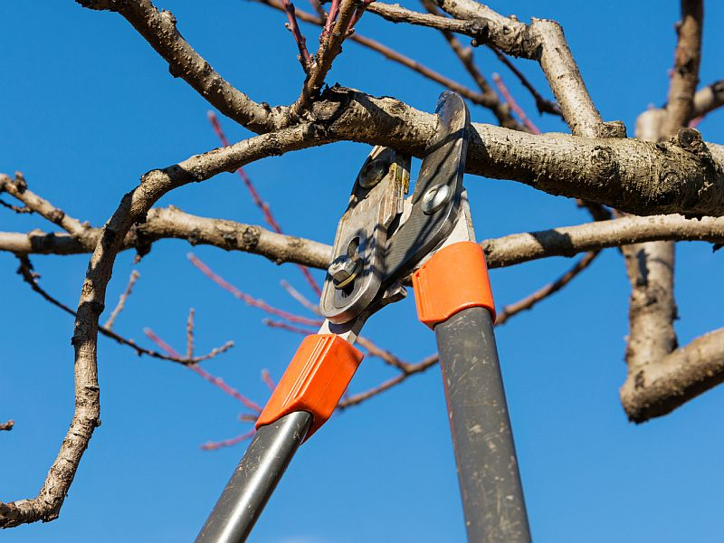 11 Ways to Stay Safe When Doing Risky Tree Work