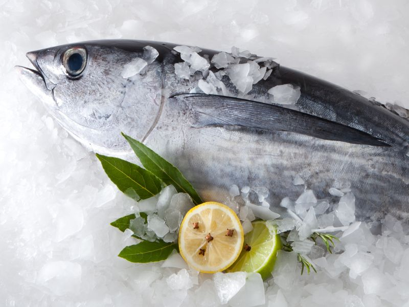 Climate Change Could Raise Mercury Levels in Some Fish