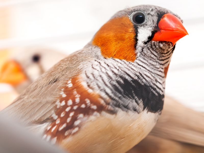 Traffic Noise Is (Bad) for the Birds