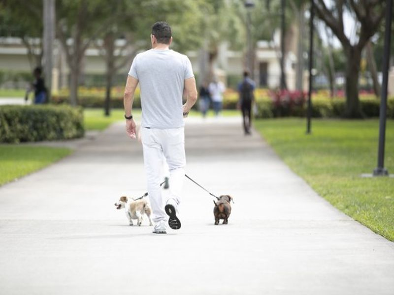 New Leash on Life: How Dog-Walking Is Helping Veterans Battered by PTSD