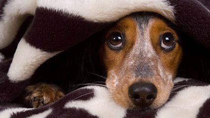 Las mascotas y la carga sobre el que las cuida